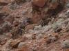 Grand Canyon MD2014 (1098)-1280