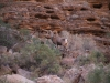 Grand Canyon MD2014 (1160)-1280