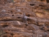 Grand Canyon MD2014 (1163)-1280