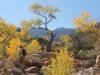 Grand Canyon MD2014 (464)-1280