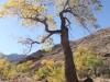 Grand Canyon MD2014 (467)-1280