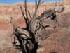 Grand Canyon MD2014 (519)-1280