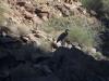 Grand Canyon MD2014 (851)-1280