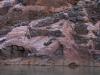 Grand Canyon MD2014 (879)-1280