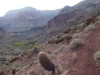 Grand Canyon Nov 2014 458-1280