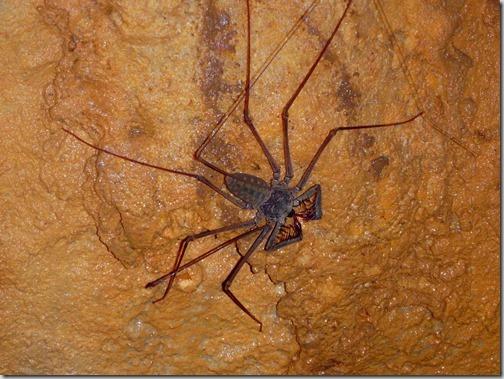 Lanquin Guatemala Caves Spider