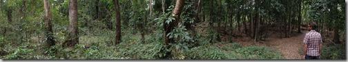 Copan Ruin Ruinas Honduras 6